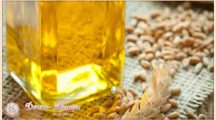 Масло зародышей пшеницы: свойства и применение