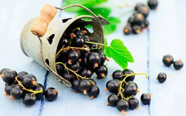 сорта-черной-смородины