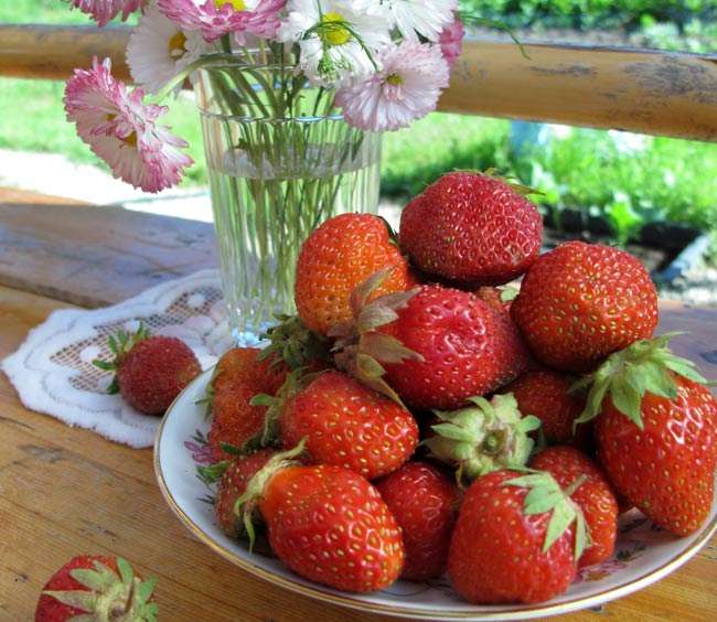 ягоды-клубники
