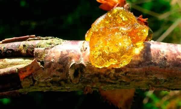 гоммоз-вишни