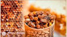 Как принимать пчелиную пергу