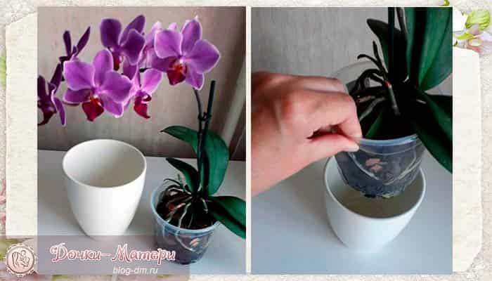горшок-для-орхидей