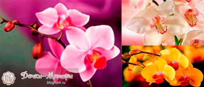 как-ухаживать-за-орхидеями