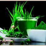 хлорелла-полезные-свойства-и-противопоказания