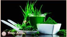 Хлорелла — полезные свойства и противопоказания