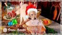 Меню на Новый год 2018: что готовить новое и интересное в год собаки