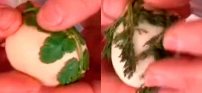 накладываем-зелень-на-яйцо