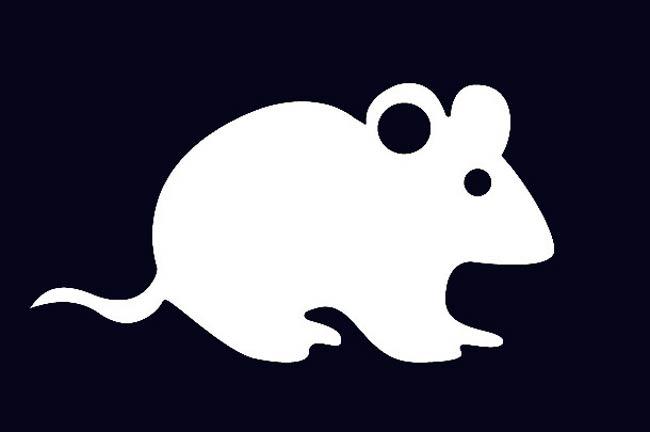 белая-крыса-2020