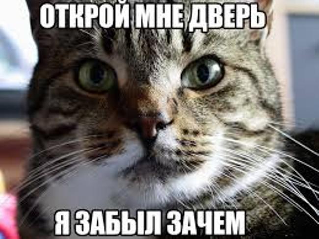 день-кошек-1-марта