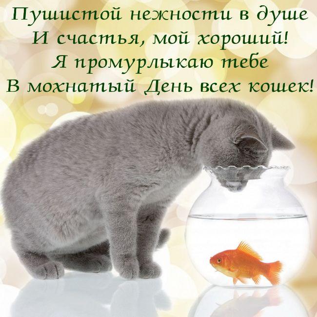 день-кошек-картинка