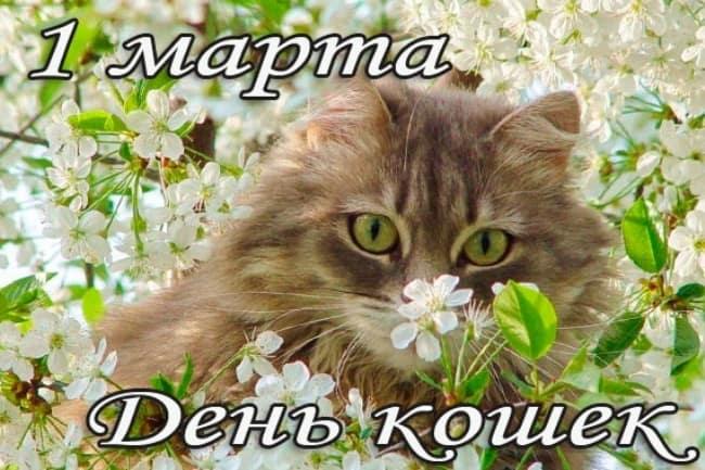 день-кошек-открытка