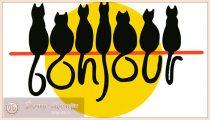 Картинки на Всемирный день кошек – прикольные и красивые картинки на 1 марта 2020 года