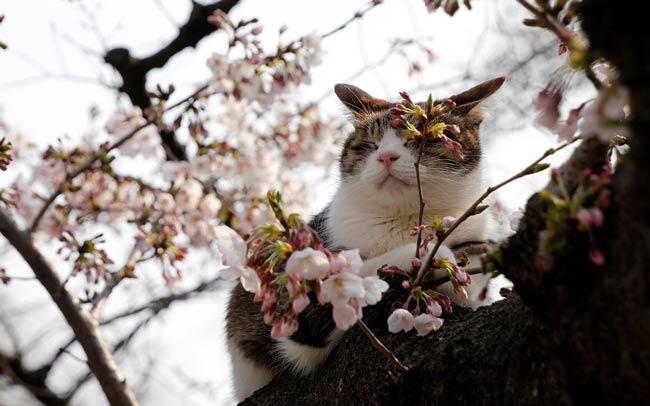 кот-на-дереве