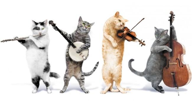 красивая-картинка-с-днем-кошек