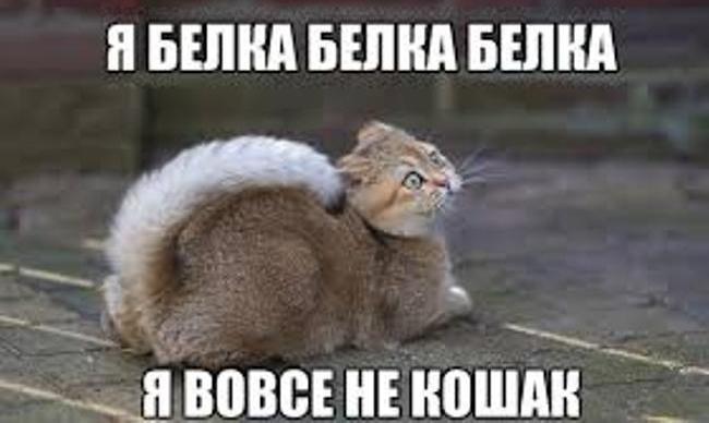 поздравление-для-котов