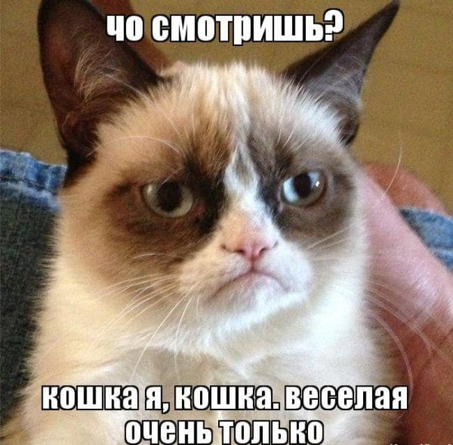 поздравление-на-день-кошек