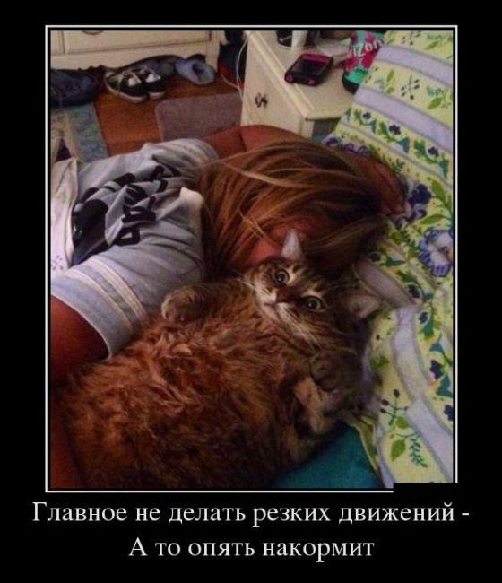 прикольные-картинки-про-кошек
