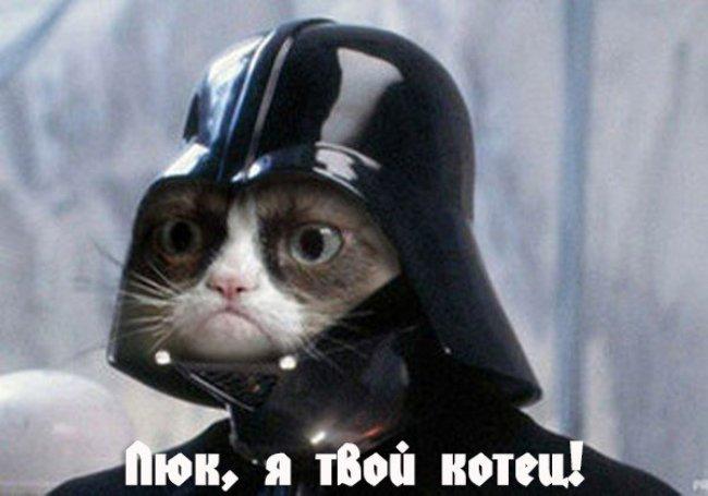 с-днем-кошек-открытка