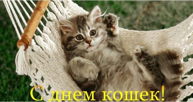 с-днем-кошек