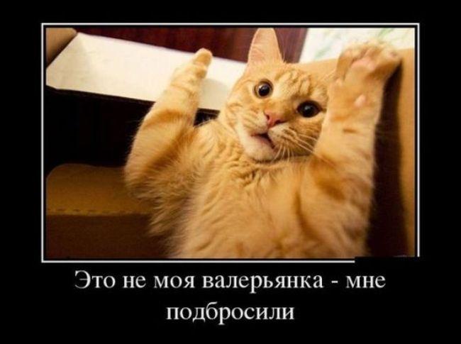 смешная-открытка-про-кошек