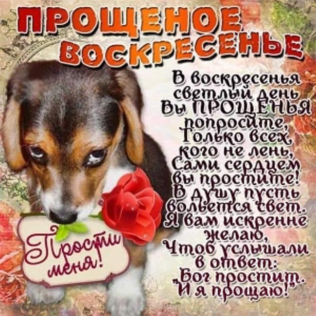 с-прощеным-воскресеньем-юмор-открытка