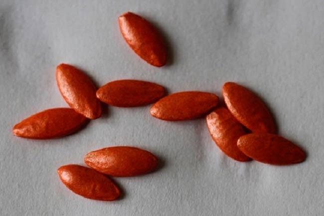протравленные-семена-огурцов