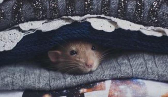 новый-год-крысы-2020