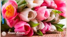 Прикольные поздравления на 8 Марта для женщин