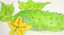 Как нарисовать огурец карандашом поэтапно начинающим