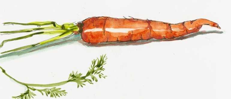 рисунок морковки карандашом